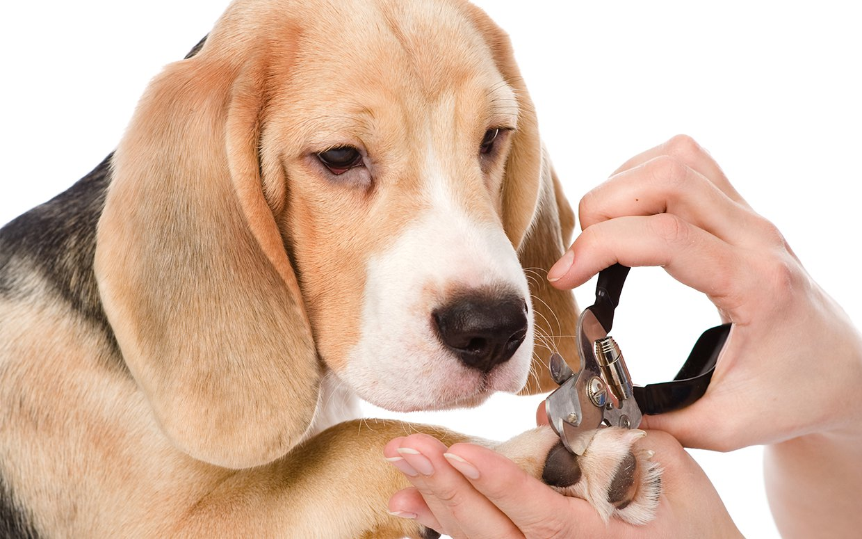 Where To Get Your Dogs Nails Clipped